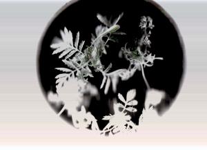 """After John Herschel, archival inkjet print from field scan process, 30""""x40"""", 2011"""