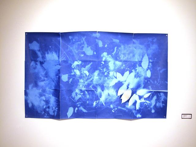 "Weeding Grid, install shot, cyanotype prints, 30""x40"", 2013"
