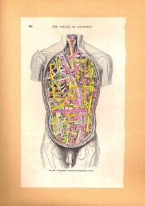 Map of the Human Body