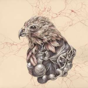 Hawk, Pen and Ink with Ink Wash, 11in x 11in, 2014