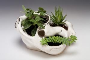 """Living Vessel, ceramic, succulents, 9""""-5""""-4"""", 2013"""