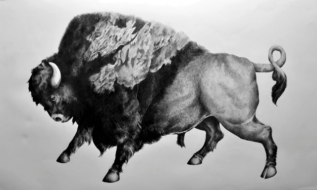 Bison, graphite on paper, 50 in by 30 in, 2013