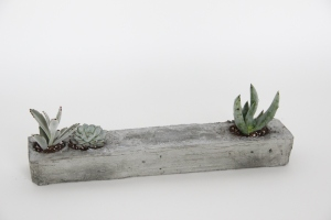 "Grounded together regardless Concrete, potting soil, plants 18""x4""x3"" 2014"