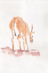 "Still / Watercolor / 5"" x 7""  / 2012"