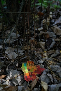 Fig. 38: in autumn, some leaves will use color bars to help get everything perfect.  Watercolor on maple leaf, archival computer print, dimensions variable, 2011