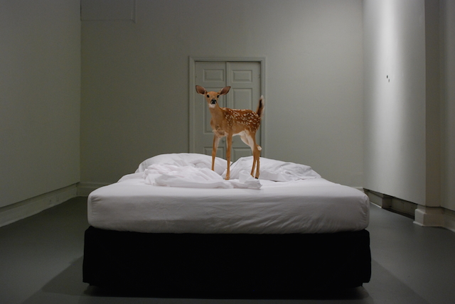 """What happens when you die""  2010 taxidermy fawn, bed, cremation tag"