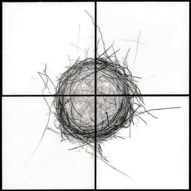 "Nest II, 2009 archival pigment prints and encaustic 32""h x 32""w x 1.5""d"