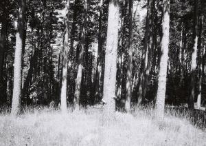 Esencia (08), Fotografía analógica, 20x30 cm, 2014