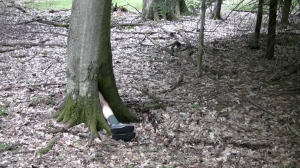 Cook Forest Studies (still), 2011, HD video